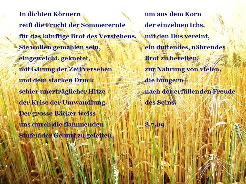 In dichten Körnern reift die Frucht der Sommerernte. für das künftige Brot des Verstehens. Sie wollen gemahlen sein,