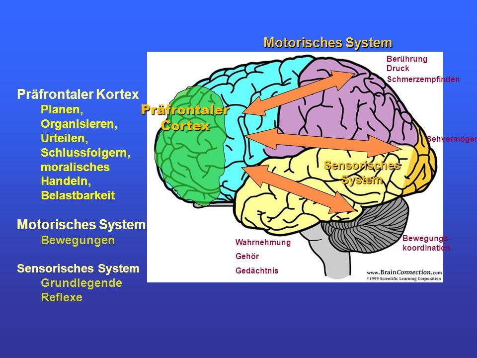 Motorisches System Präfrontaler Kortex Präfrontaler Cortex