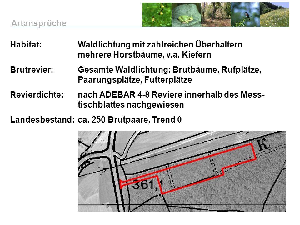 Artansprüche Habitat: Waldlichtung mit zahlreichen Überhältern mehrere Horstbäume, v.a. Kiefern.