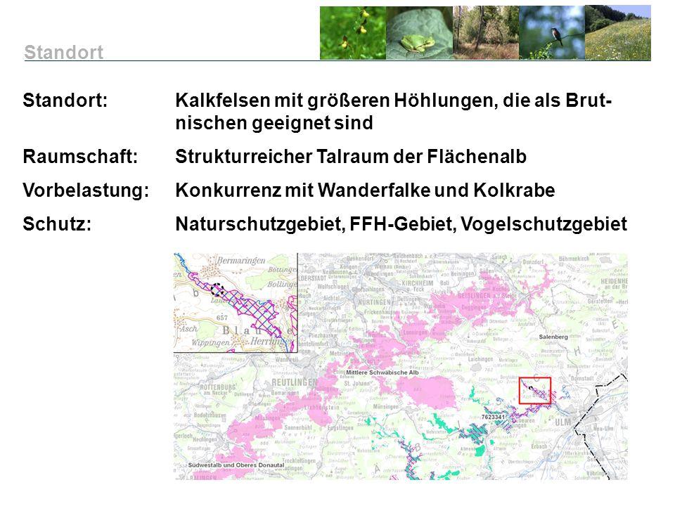 Standort Standort: Kalkfelsen mit größeren Höhlungen, die als Brut- nischen geeignet sind. Raumschaft: Strukturreicher Talraum der Flächenalb.