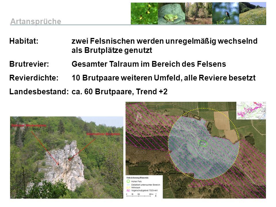 Artansprüche Habitat: zwei Felsnischen werden unregelmäßig wechselnd als Brutplätze genutzt. Brutrevier: Gesamter Talraum im Bereich des Felsens.