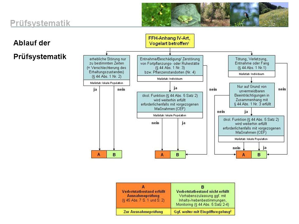 Prüfsystematik Ablauf der Prüfsystematik