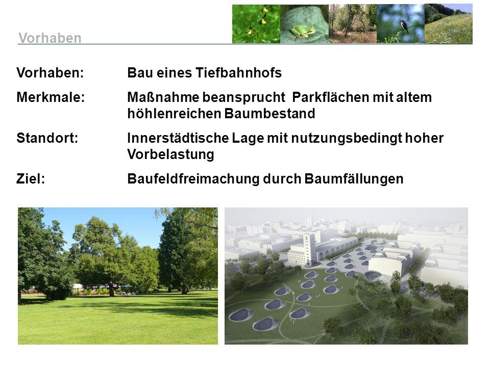 Vorhaben Vorhaben: Bau eines Tiefbahnhofs. Merkmale: Maßnahme beansprucht Parkflächen mit altem höhlenreichen Baumbestand.