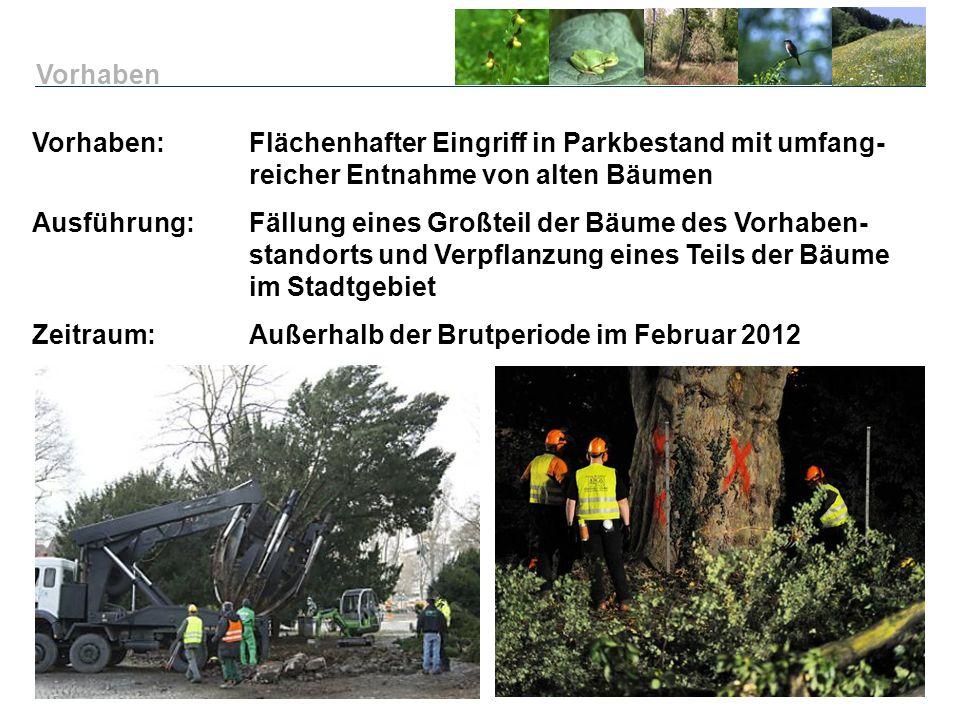 Vorhaben Vorhaben: Flächenhafter Eingriff in Parkbestand mit umfang- reicher Entnahme von alten Bäumen.
