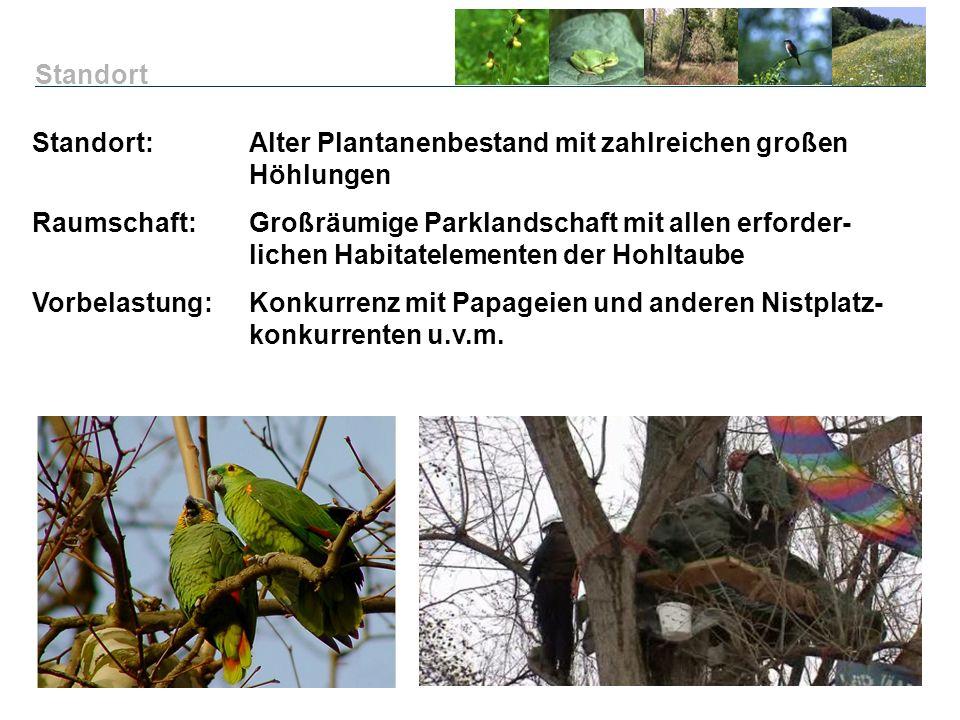 Standort Standort: Alter Plantanenbestand mit zahlreichen großen Höhlungen.