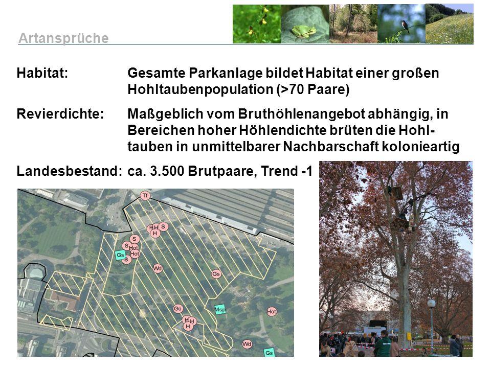 Artansprüche Habitat: Gesamte Parkanlage bildet Habitat einer großen Hohltaubenpopulation (>70 Paare)
