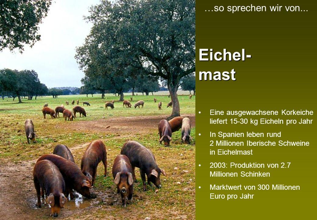 Eichel- mast …so sprechen wir von...
