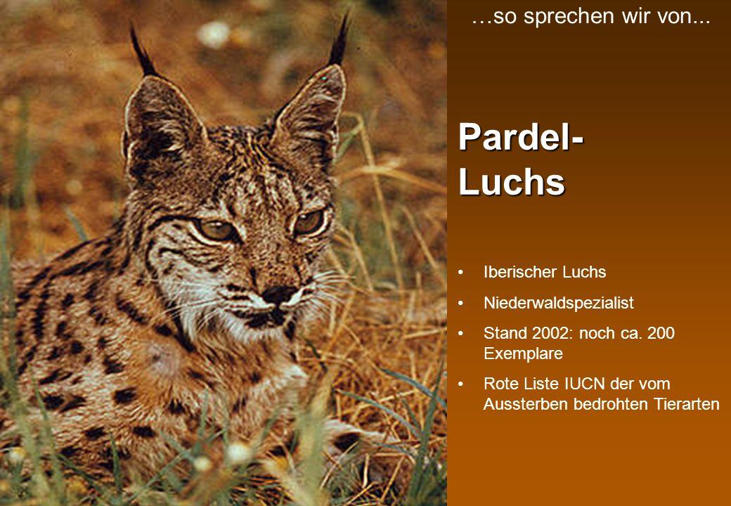 Pardel- Luchs …so sprechen wir von... Iberischer Luchs