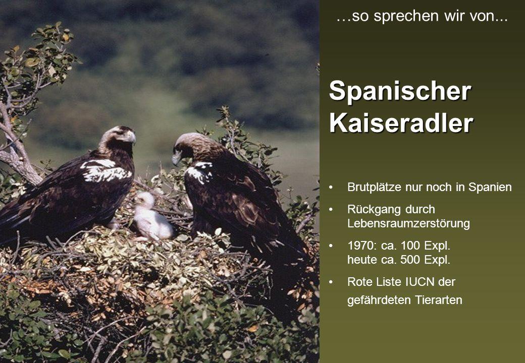 Spanischer Kaiseradler