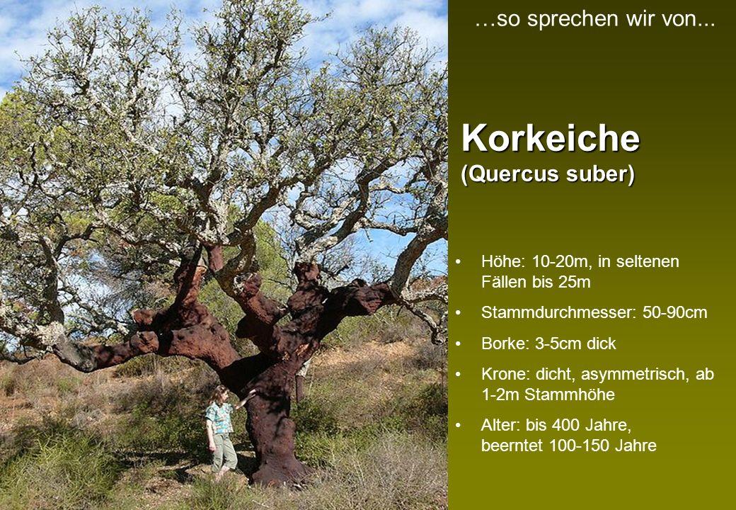 Korkeiche (Quercus suber)