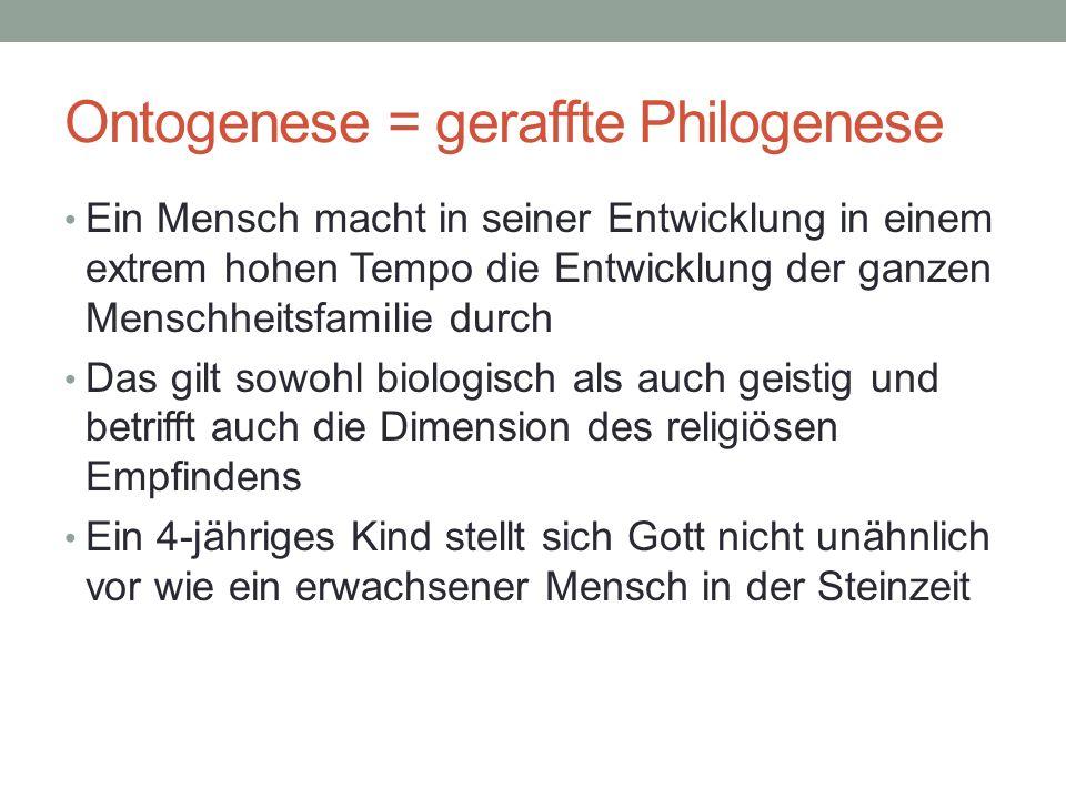 Ontogenese = geraffte Philogenese