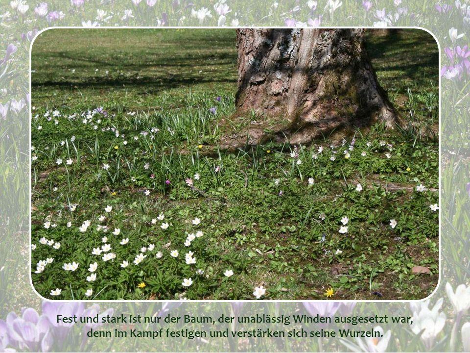 Fest und stark ist nur der Baum, der unablässig Winden ausgesetzt war,