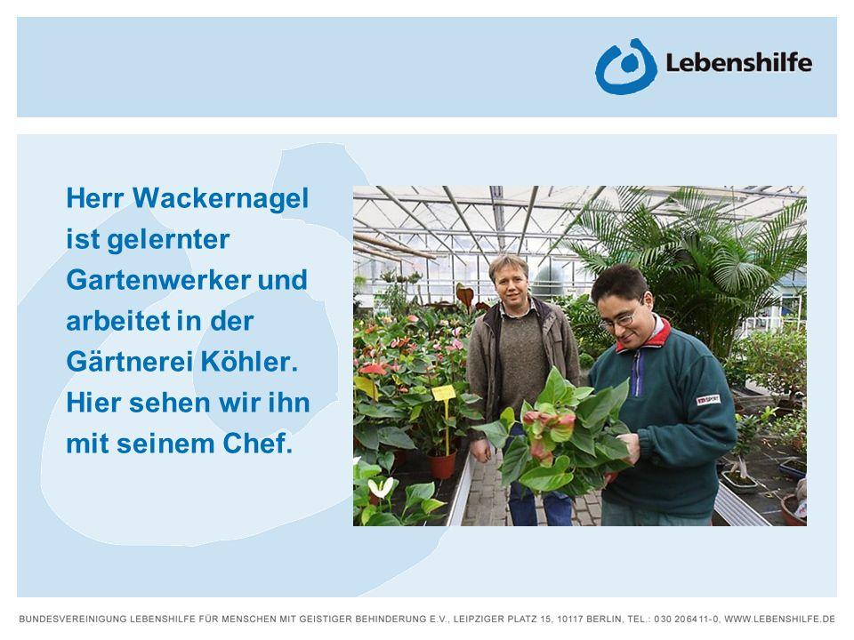 Herr Wackernagel ist gelernter Gartenwerker und arbeitet in der Gärtnerei Köhler.