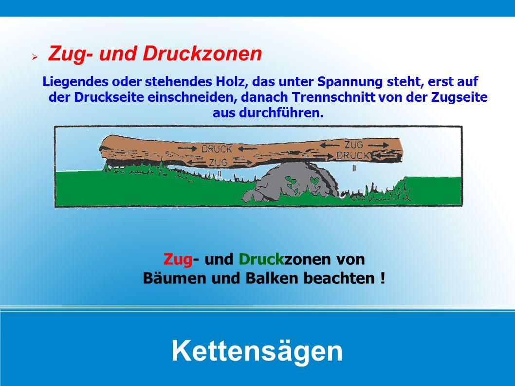 Zug- und Druckzonen von Bäumen und Balken beachten !