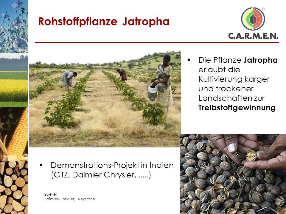 Rohstoffpflanze Jatropha