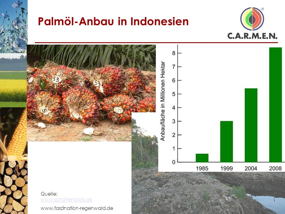 Palmöl-Anbau in Indonesien