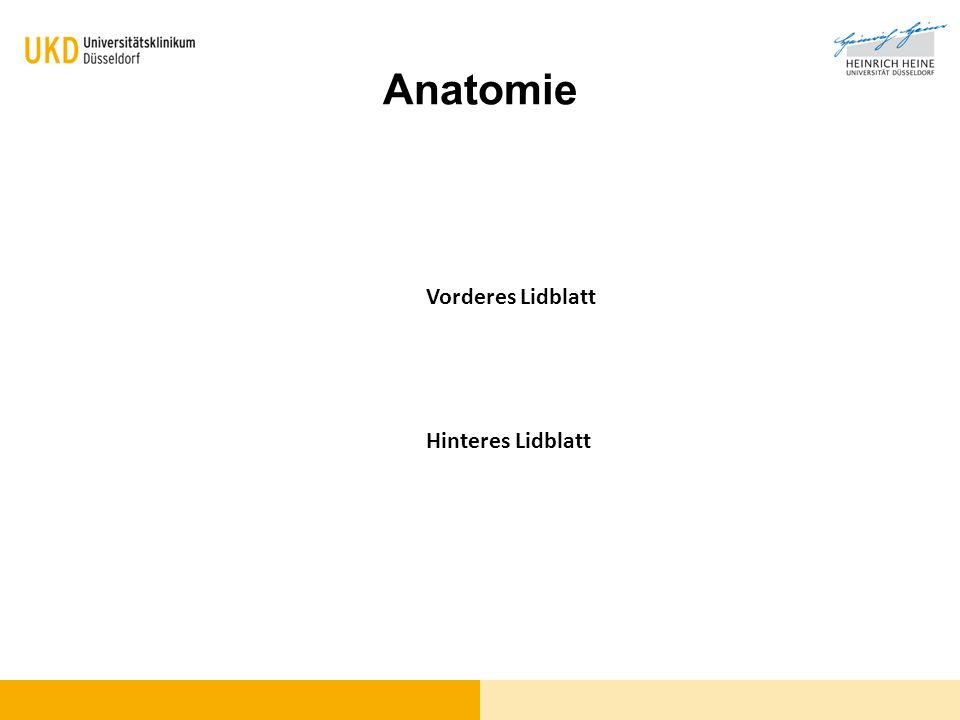 Anatomie Vorderes Lidblatt Hinteres Lidblatt