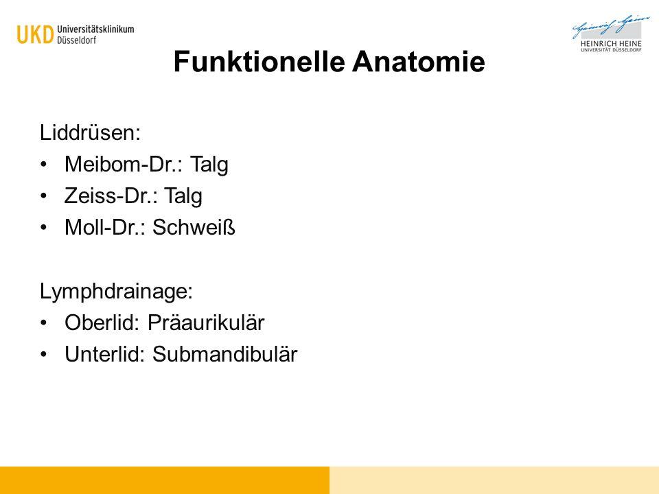 Nett Oberlid Anatomie Fotos - Menschliche Anatomie Bilder ...