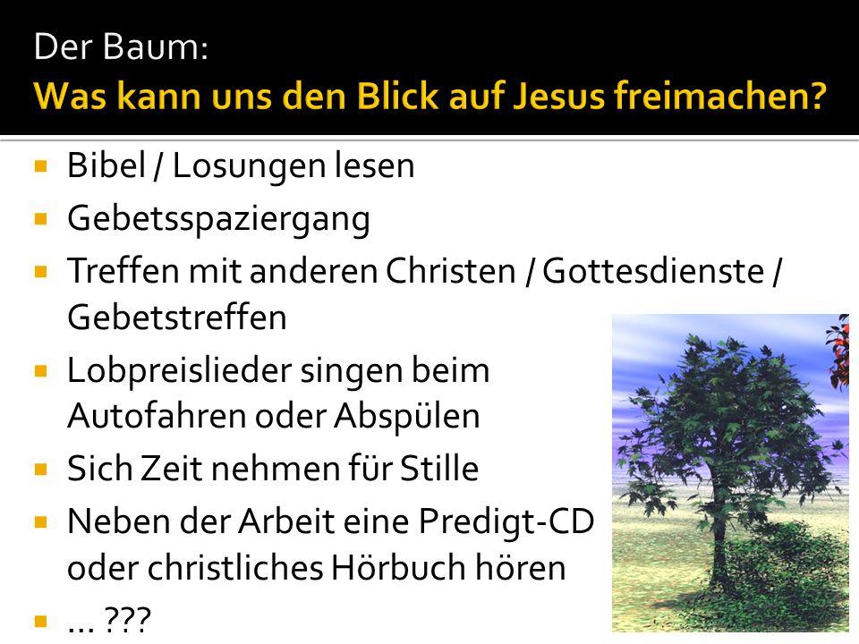 Der Baum: Was kann uns den Blick auf Jesus freimachen