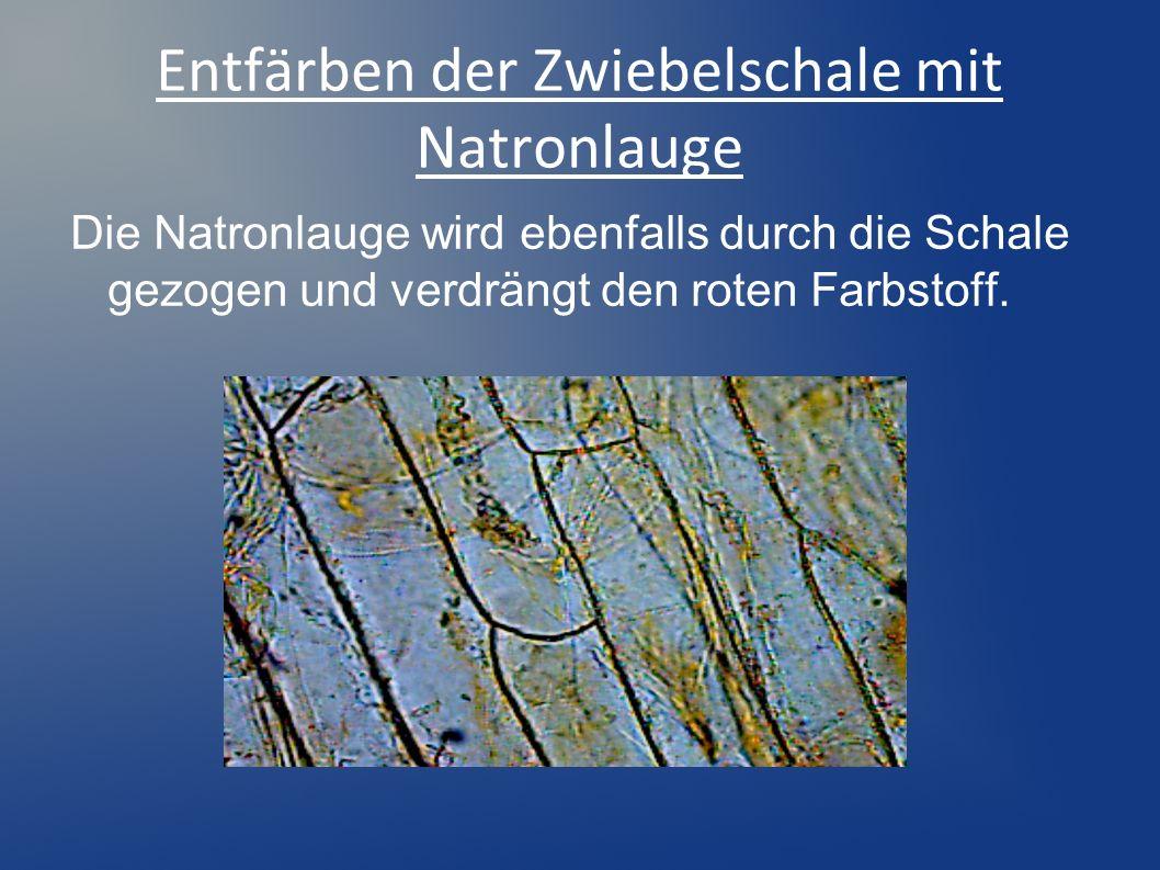 Entfärben der Zwiebelschale mit Natronlauge