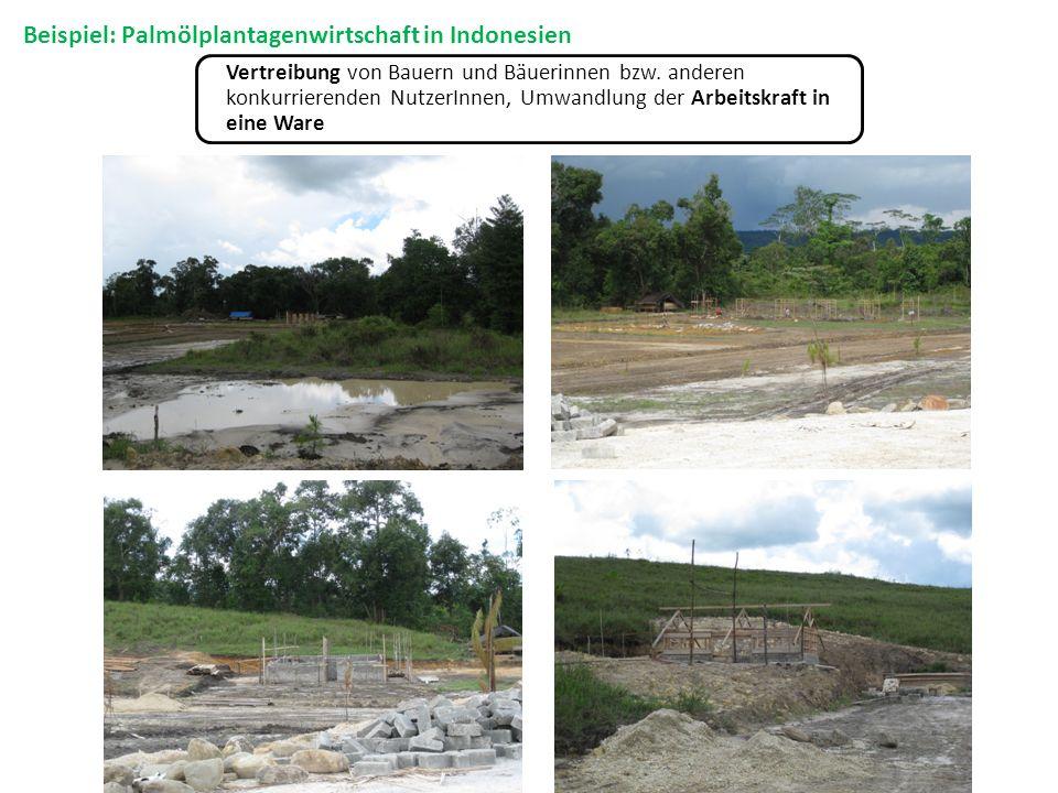 Beispiel: Palmölplantagenwirtschaft in Indonesien