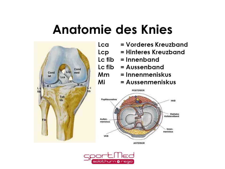Anatomie des Knies Lca = Vorderes Kreuzband Lcp = Hinteres Kreuzband
