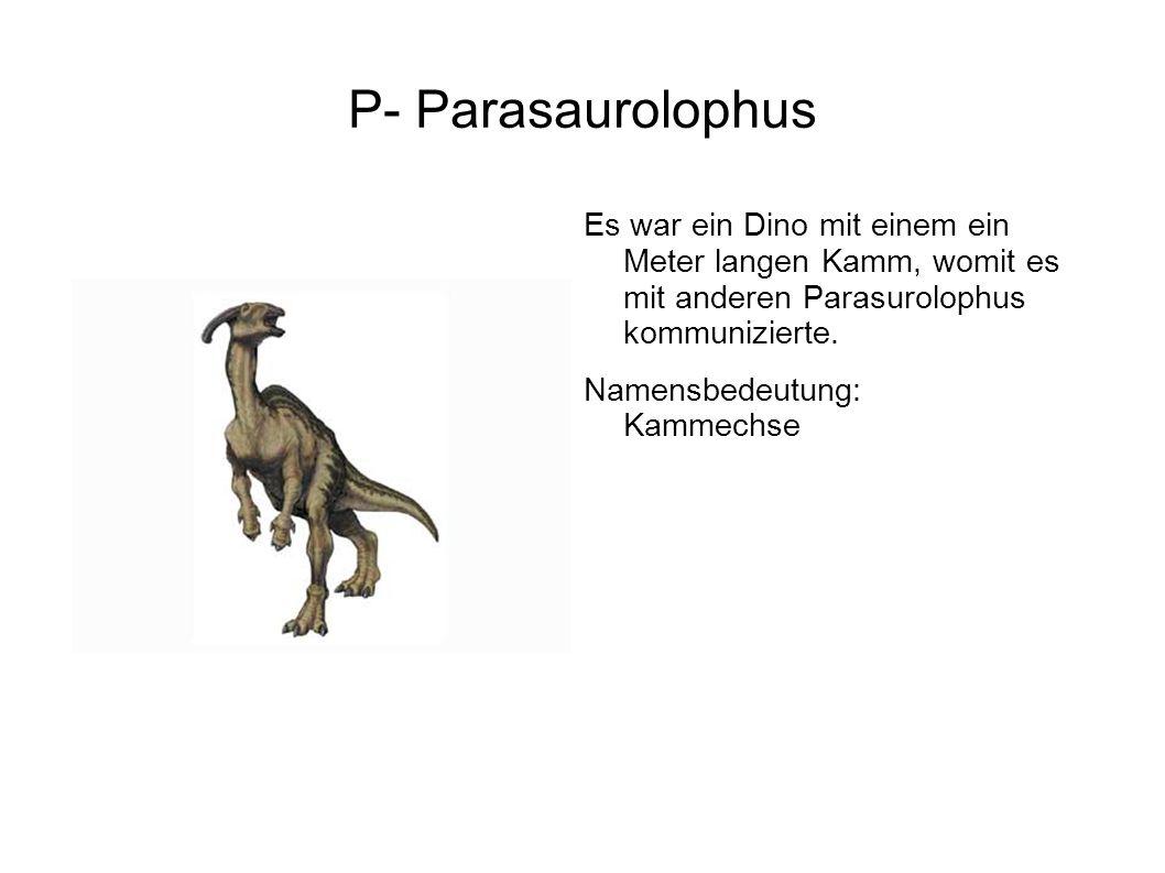 P- Parasaurolophus Es war ein Dino mit einem ein Meter langen Kamm, womit es mit anderen Parasurolophus kommunizierte.