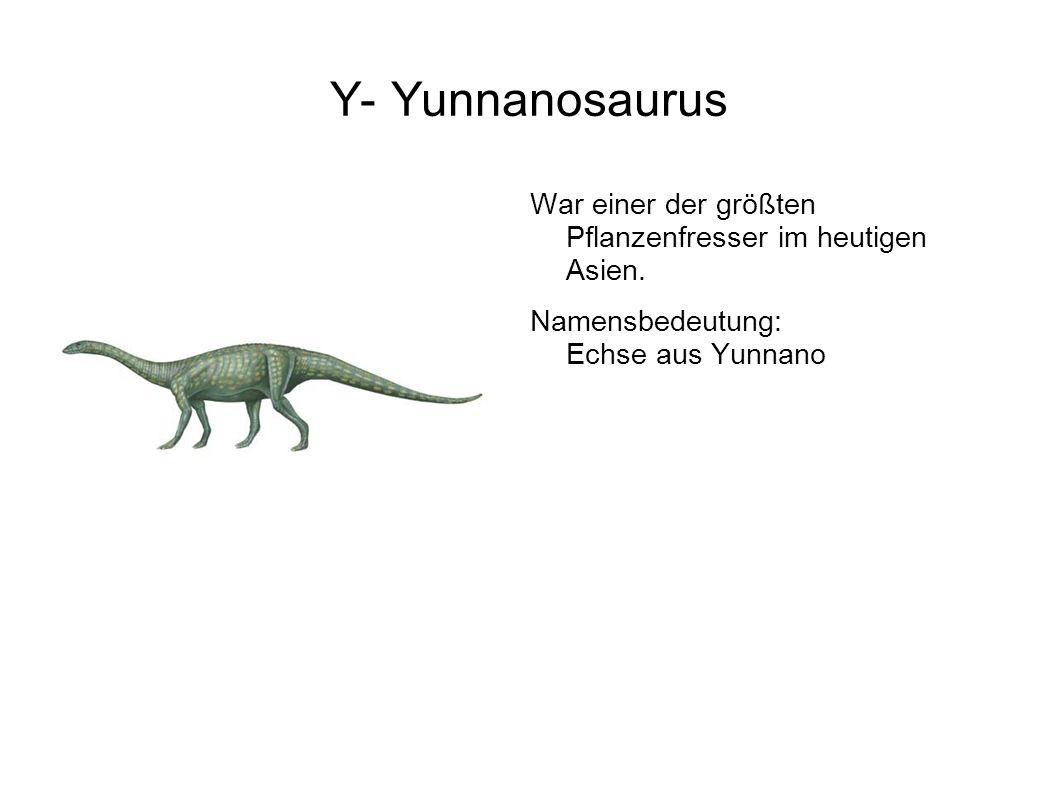 Y- Yunnanosaurus War einer der größten Pflanzenfresser im heutigen Asien.