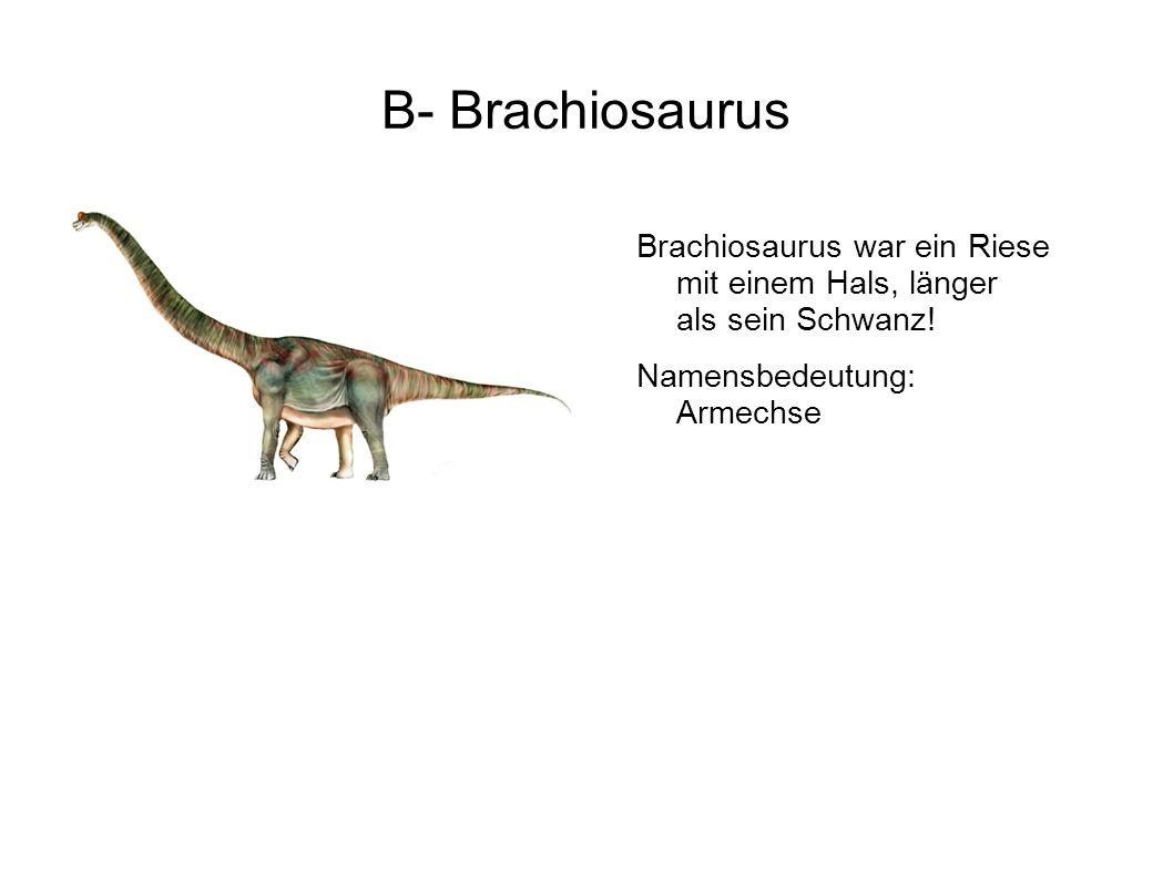 B- Brachiosaurus Brachiosaurus war ein Riese mit einem Hals, länger als sein Schwanz.