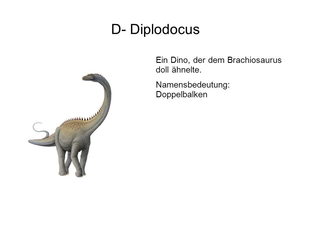 D- Diplodocus Ein Dino, der dem Brachiosaurus doll ähnelte.