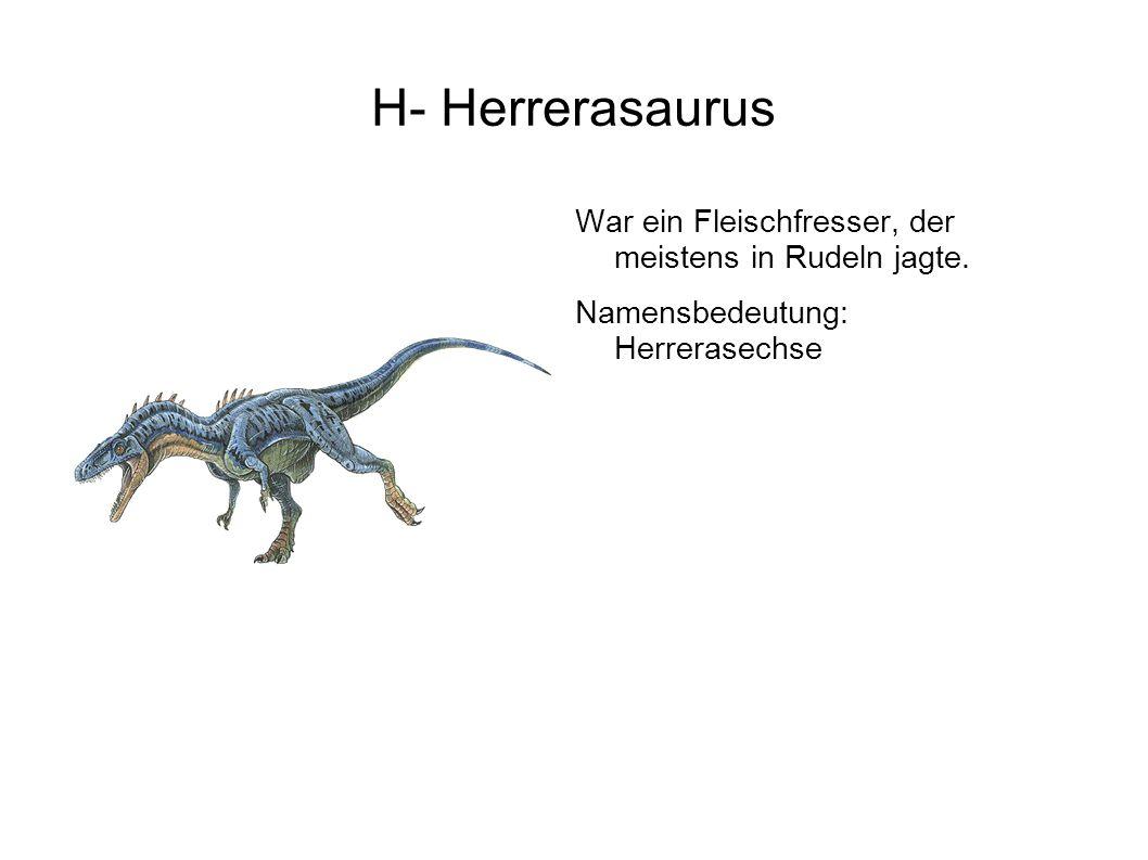 H- Herrerasaurus War ein Fleischfresser, der meistens in Rudeln jagte.