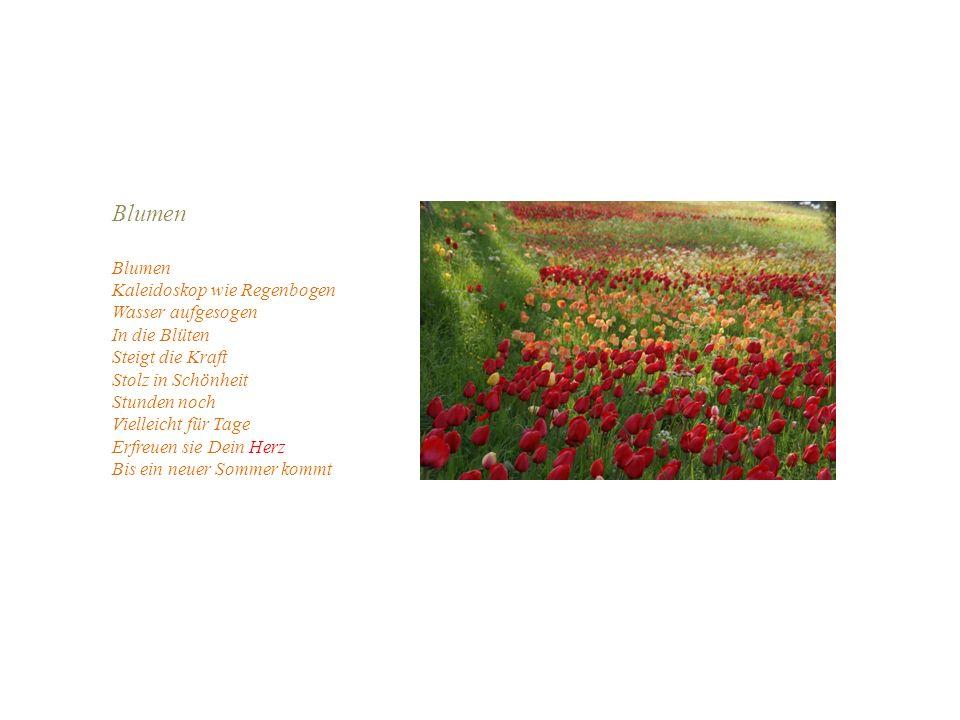 Blumen Kaleidoskop wie Regenbogen Wasser aufgesogen In die Blüten