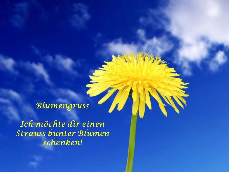 Blumengruss Ich möchte dir einen Strauss bunter Blumen schenken!