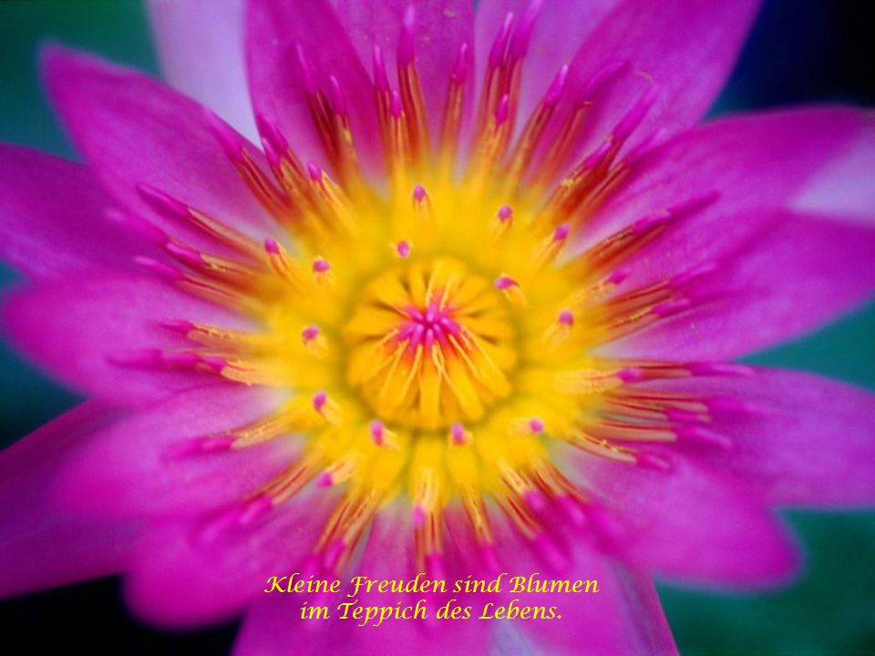 Kleine Freuden sind Blumen im Teppich des Lebens.