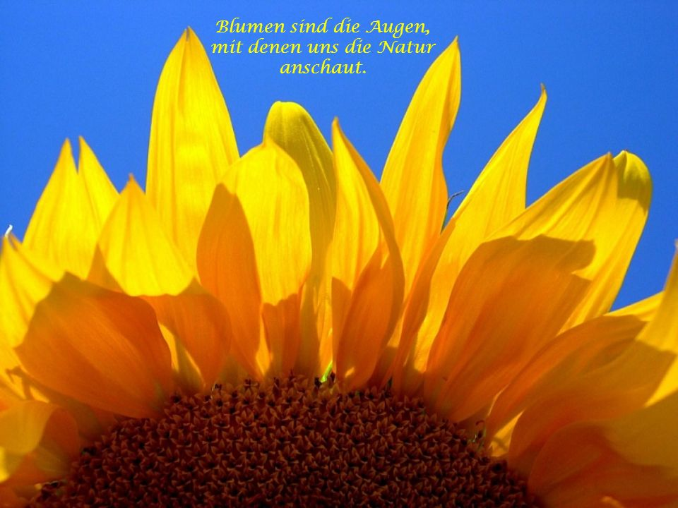 Blumen sind die Augen, mit denen uns die Natur anschaut.