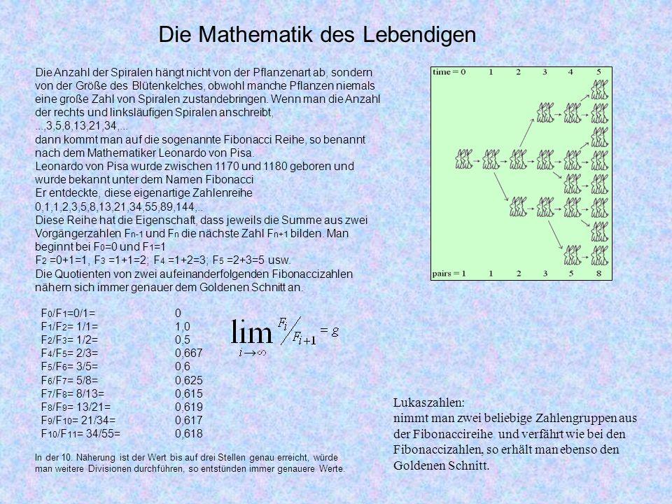 Die Mathematik des Lebendigen