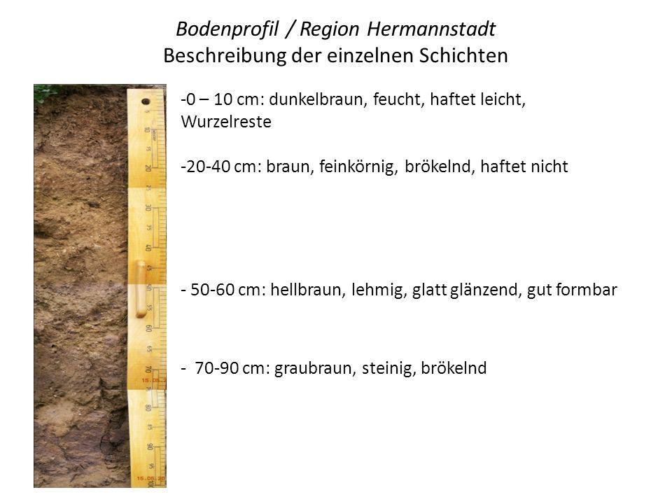 Bodenprofil / Region Hermannstadt Beschreibung der einzelnen Schichten