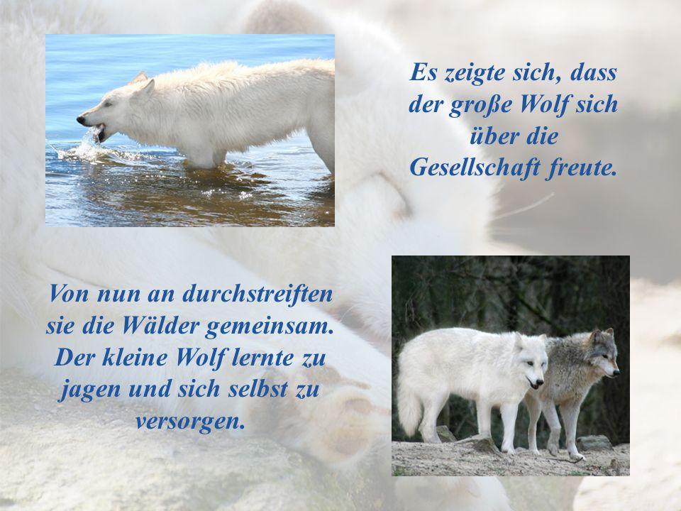 Es zeigte sich, dass der große Wolf sich über die Gesellschaft freute.