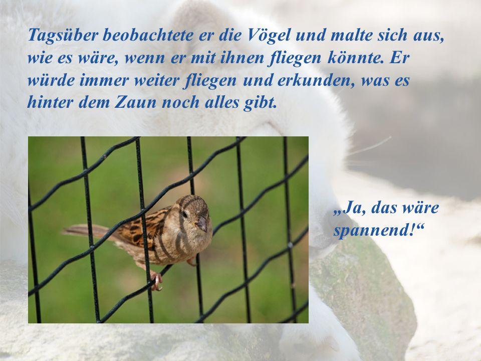Tagsüber beobachtete er die Vögel und malte sich aus, wie es wäre, wenn er mit ihnen fliegen könnte. Er würde immer weiter fliegen und erkunden, was es hinter dem Zaun noch alles gibt.