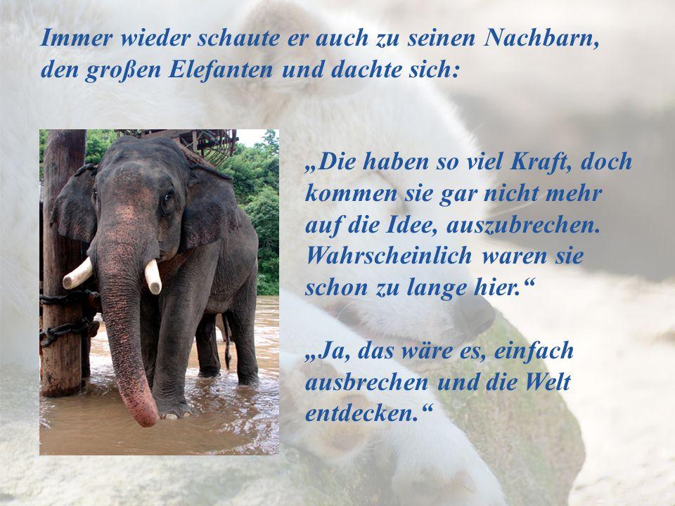 Immer wieder schaute er auch zu seinen Nachbarn, den großen Elefanten und dachte sich: