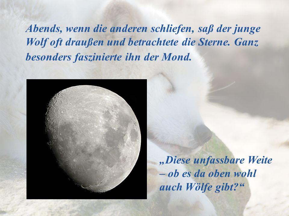 Abends, wenn die anderen schliefen, saß der junge Wolf oft draußen und betrachtete die Sterne. Ganz besonders faszinierte ihn der Mond.