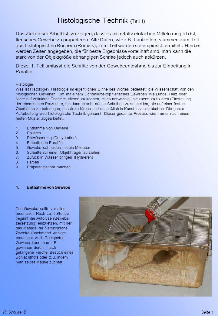Histologische Technik (Teil 1)