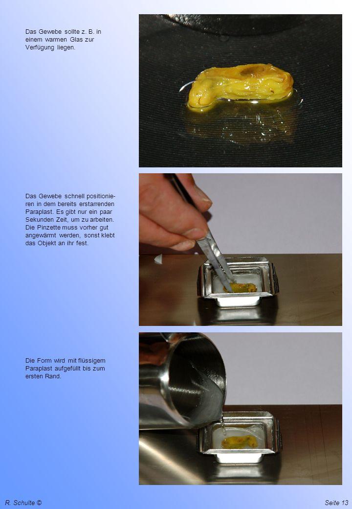 Das Gewebe sollte z. B. in einem warmen Glas zur Verfügung liegen