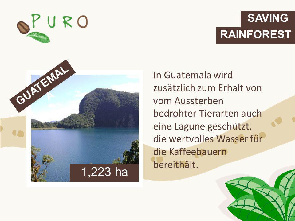 1,223 ha SAVING RAINFOREST GUATEMALA