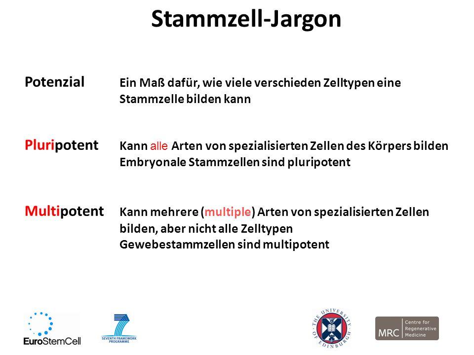 Stammzell-Jargon Potenzial Ein Maß dafür, wie viele verschieden Zelltypen eine Stammzelle bilden kann.