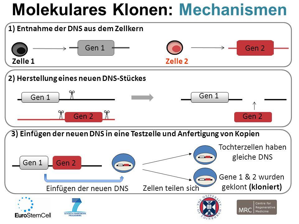 Molekulares Klonen: Mechanismen