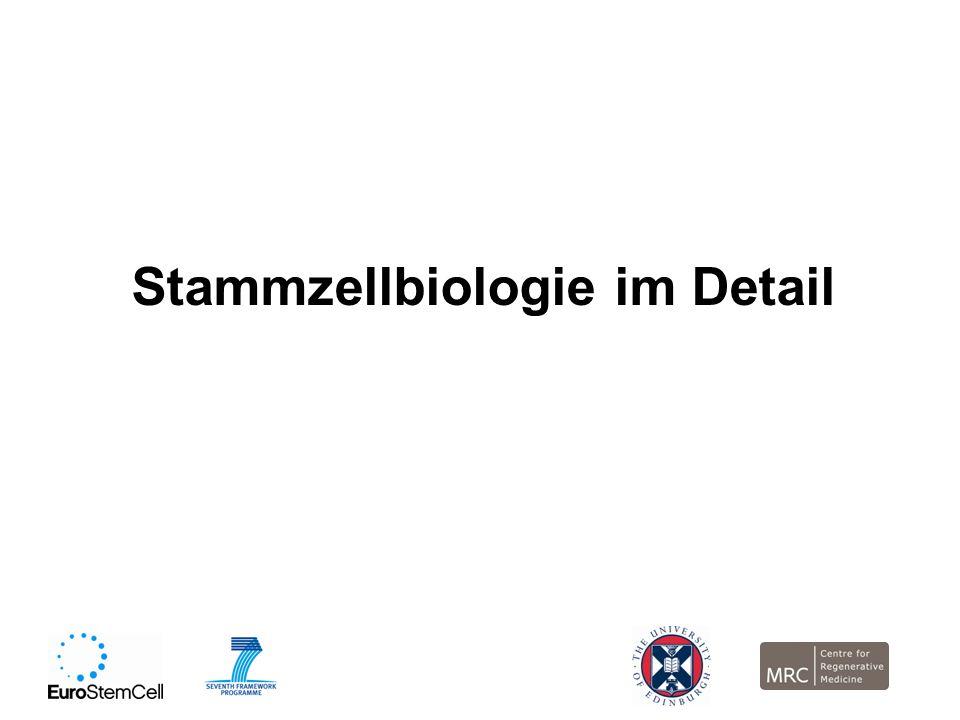 Stammzellbiologie im Detail
