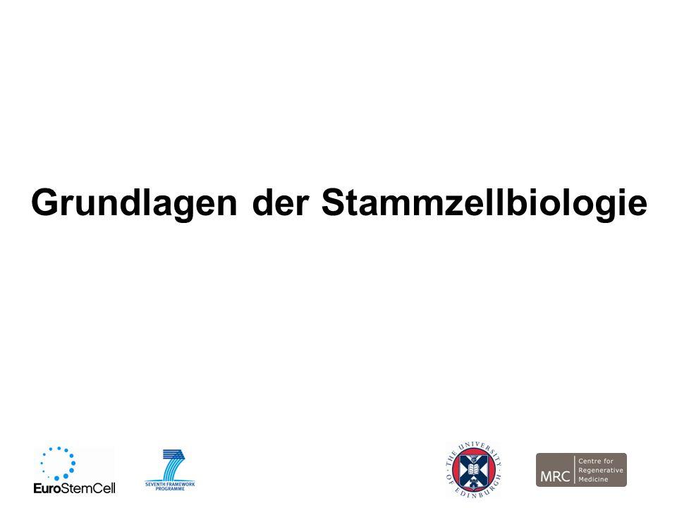 Grundlagen der Stammzellbiologie