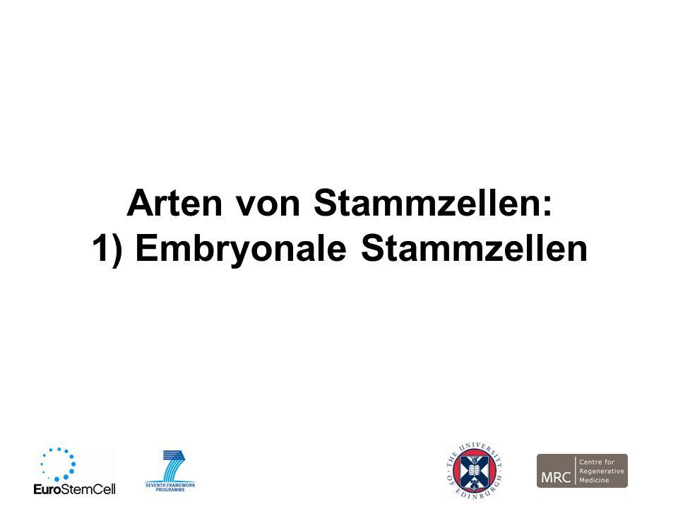Arten von Stammzellen: 1) Embryonale Stammzellen