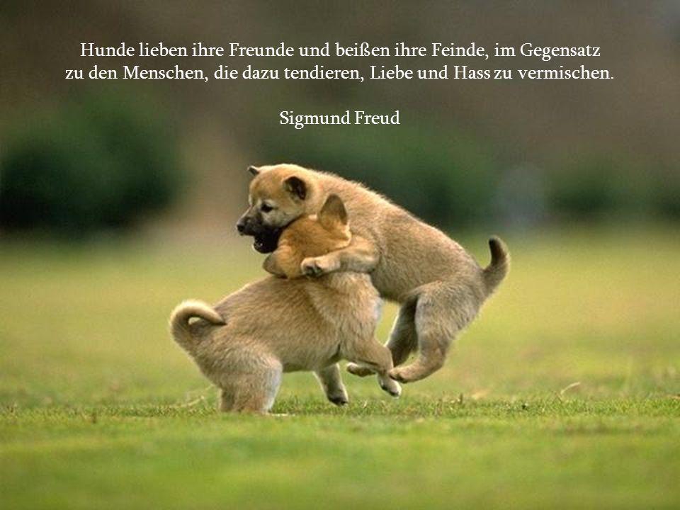 Hunde lieben ihre Freunde und beißen ihre Feinde, im Gegensatz
